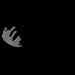 UM6SS-Ecole-supérieure-de-génie-biomédical